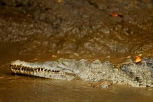 crocs01-1000x670